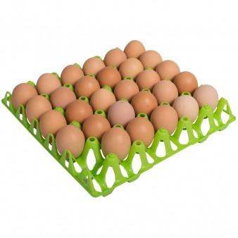 Eierhöcker