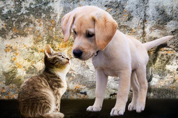 Hunde & Katzen