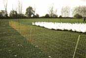 Geflügel-Netz
