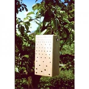 Insektennistholz