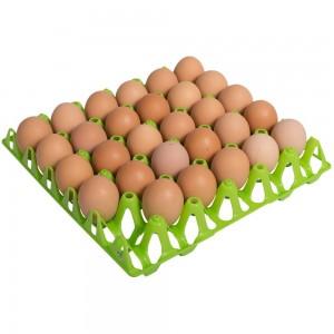 Eierhöcker für 30 Hühnereier, grün