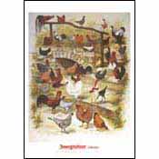 Poster: Zwerghühner (Bantams)