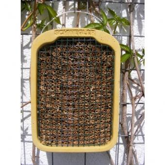 Insektennistwand mit Naturschilf